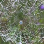 Do You Love The Web You Weave?